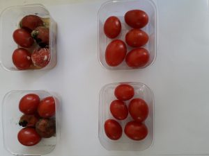 گوجه یووی