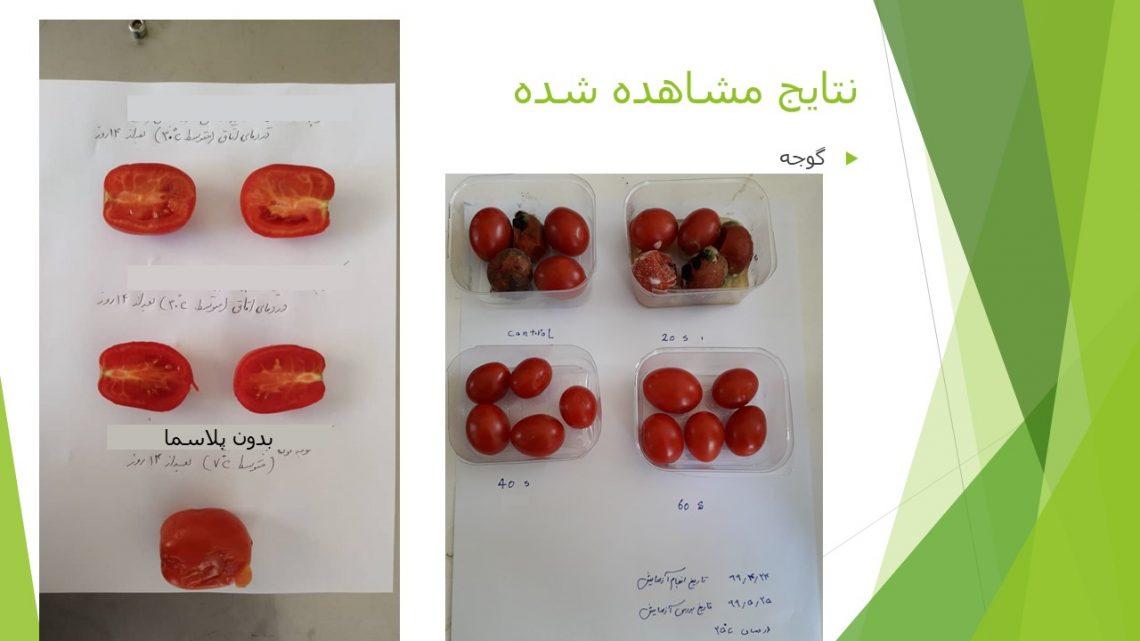گوجه افزایش ماندگاری محصولات کشاورزی
